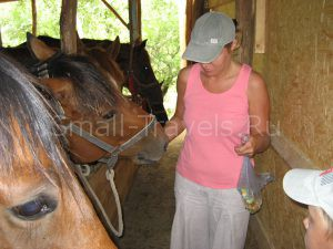 Кормим лошадей